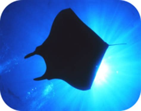 Rays - Learn All About Rays
