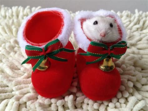 Forget Christmas, It's Time for Cute-Mas - Neatorama